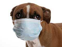 canine influenza, canine flu, dog flu