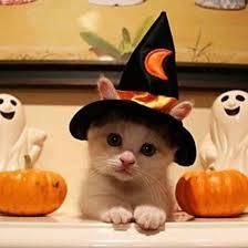 halloweenkitten