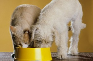 Myths abouth fillers and by-products in pet food.