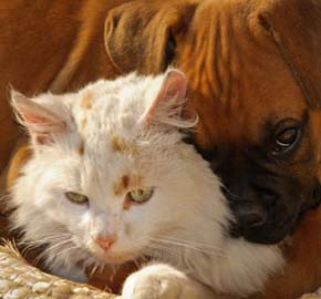 Pet Cancer Care From Community Animal Hospital