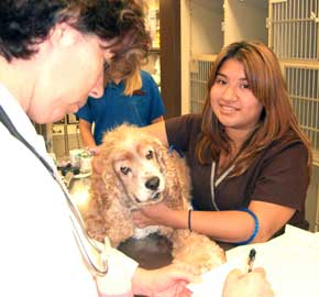 Comprehensive Skin Care at Community Animal Hospital