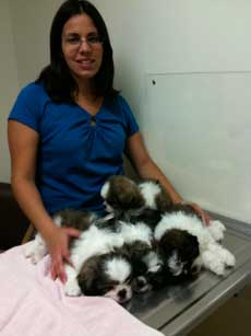 Puppy Care at Community Animal Hospital