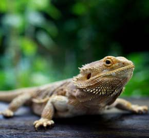 Veterinary Care for Reptiles at Community Animal Hospital