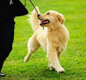 Pet Training Tips From Community Animal Hospital